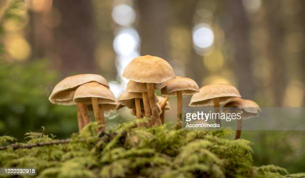 close up of wild mushrooms - mushrooms stock pictures, royalty-free photos & images