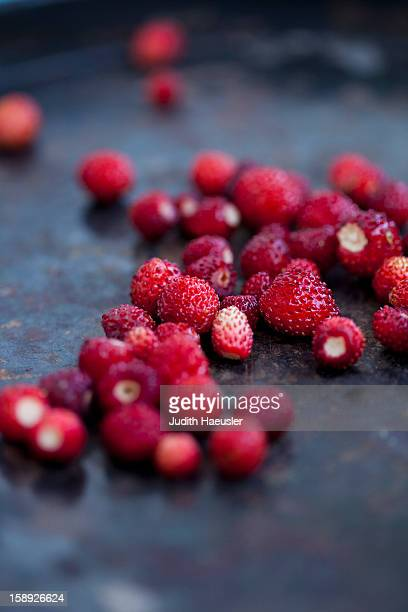 Close up of wild strawberries