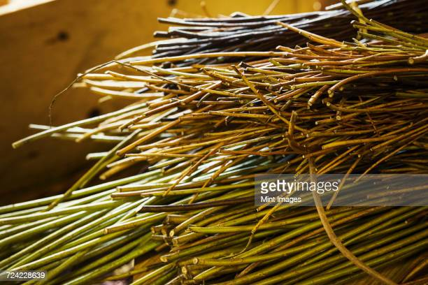 Close up of willow bundles in a basket weavers workshop.