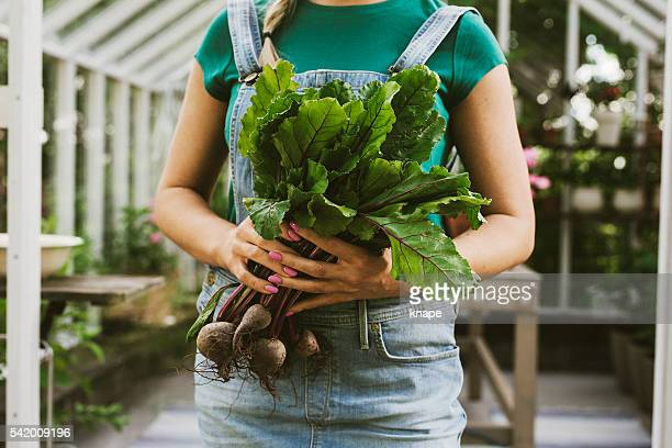 Close up of woman gardening with fresh beetroot vegetable