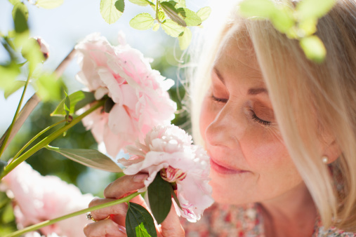 Close up of woman smelling pink flowers 173070404