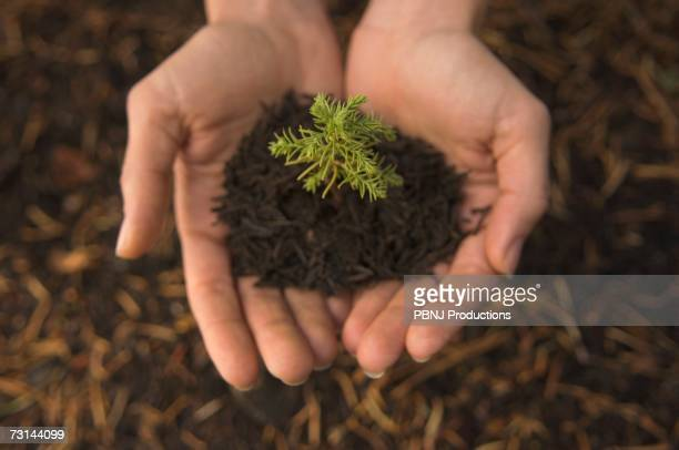 Close up of woman?s hands holding mulch and small tree