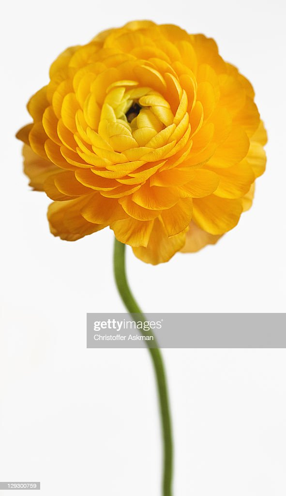Close up of yellow flower : Stock Photo