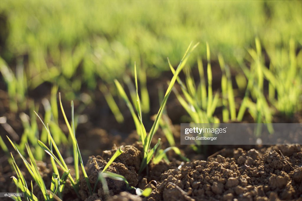 Close Up on Soil and Grass : Stock Photo