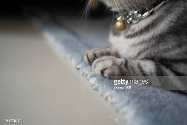close up paws kitten of british shorthair cat  feeling comfortable and sleep on the floor - pet bed stock pictures, royalty-free photos & images