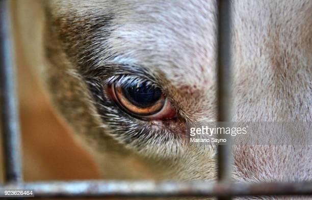 close up photo of dog's eye in cage - mishandeling stockfoto's en -beelden