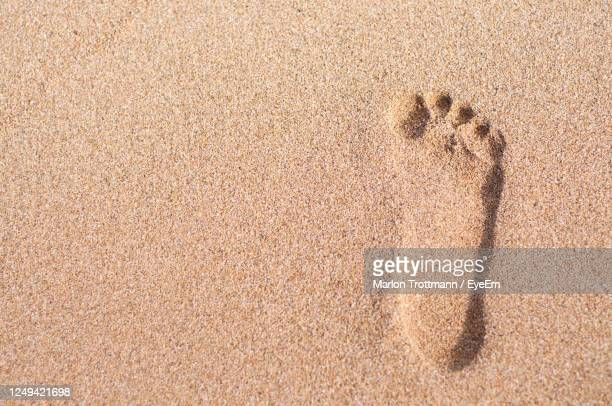 close up picture of a single footprint in the sand - tierkörper stock-fotos und bilder