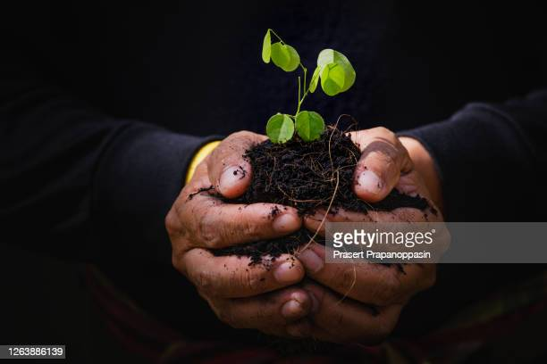 close up plant seedling in hand. care of environment - earth day foto e immagini stock