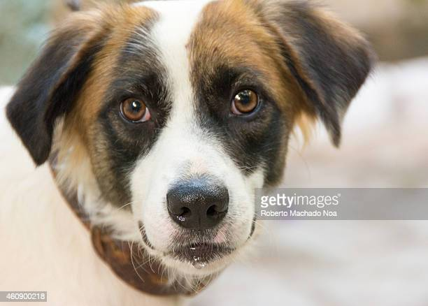 Close up portrait of a cute mutt dog pet gracious animal in a house backyard
