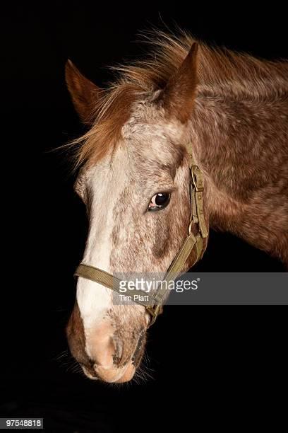 Close up portrait of a horse.
