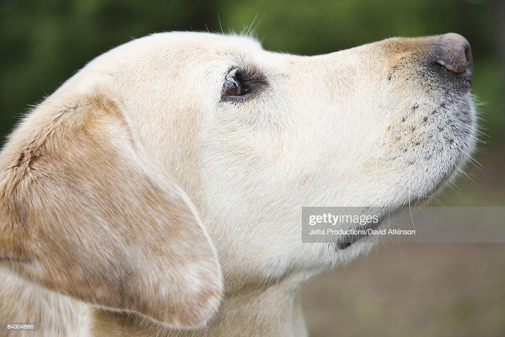 Close up portrait of dog : Stock Photo