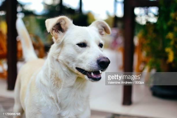 Close up portrait of puppy