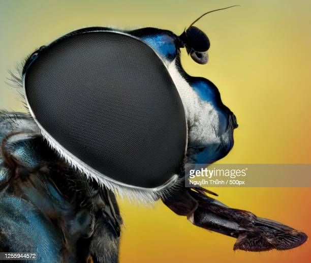 close up profile of fly, ho chi minh city, vietnam - images stock pictures, royalty-free photos & images