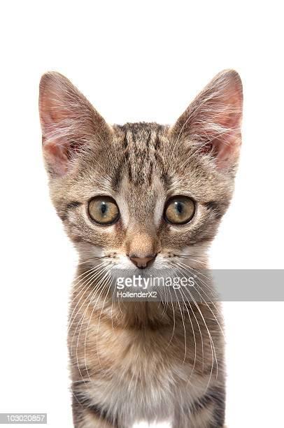Close up protrait of a kitten
