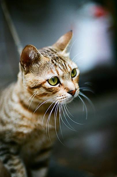 Close up shot of cat