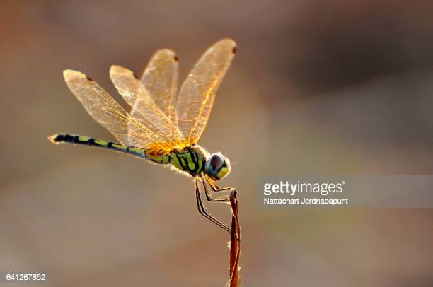 Close up shot of colorful dragonfly
