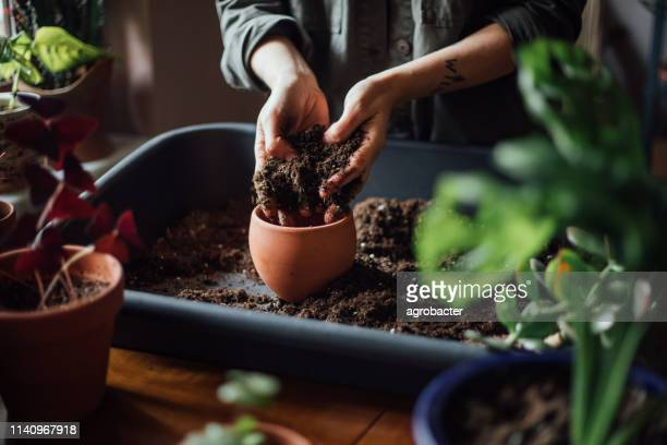 close up shot of hands working with soil - plant pot stock pictures, royalty-free photos & images