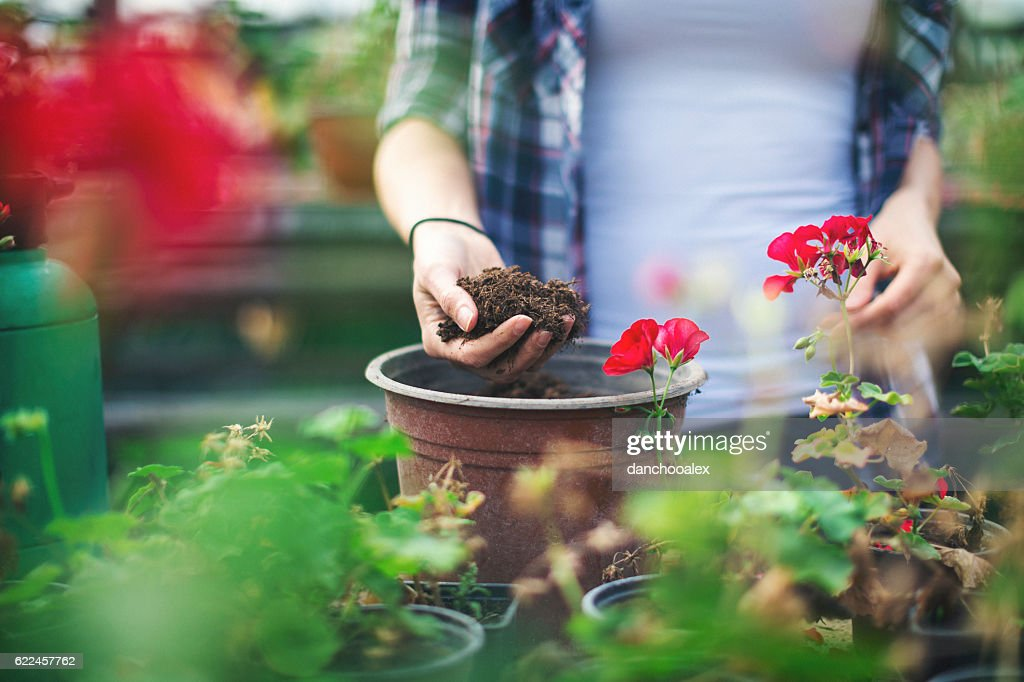 Close up shot of hands working with soil : Stock Photo