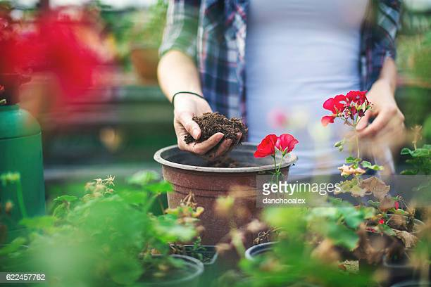 close up shot of hands working with soil - hanging basket stock pictures, royalty-free photos & images