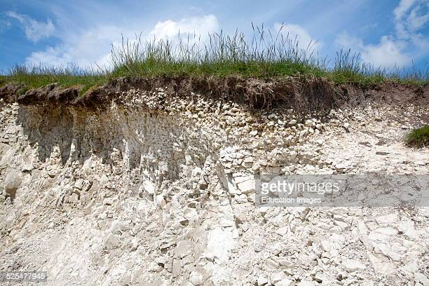 Close up soil profile cross section showing thin topsoil layer on top of white chalk rock Marlborough Downs, Wiltshire, England.