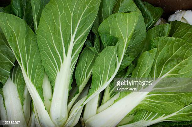 Close up view of fresh Bok Choy
