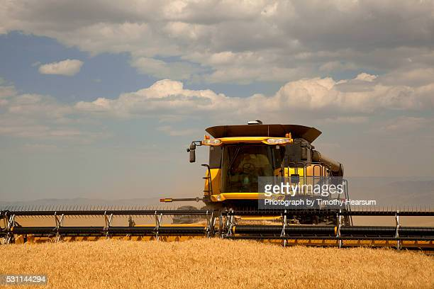 close up view of single combine cutting a field of wheat, clouds and sky beyond - timothy hearsum stock pictures, royalty-free photos & images