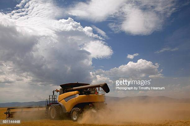 close up view of single combine cutting a field of wheat, clouds and sky beyond - timothy hearsum stock-fotos und bilder