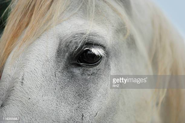 close up view of the eye of a white horse. - palmetto florida stock pictures, royalty-free photos & images