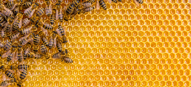 Close up view of the working bees on honey cells 545102442