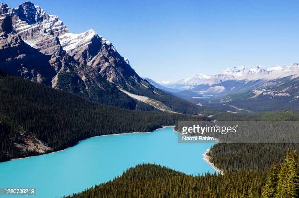 close up view of turquoise peyto lake on a sunny day, banff national park, alberta, canada - 氷河湖 ストックフォトと画像