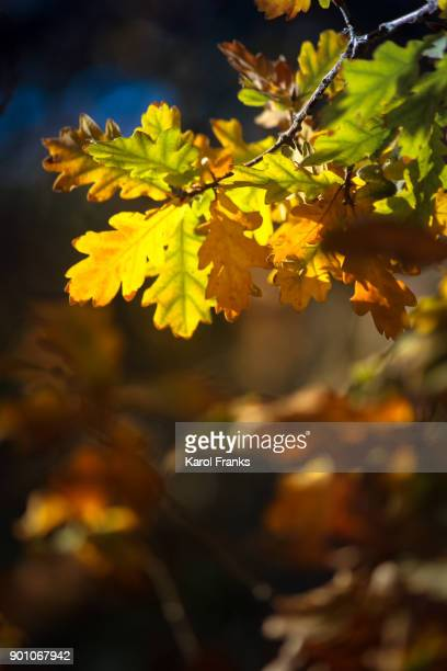 Close up view of vibrant autumn leaves