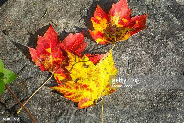 close ups of Fall leaves
