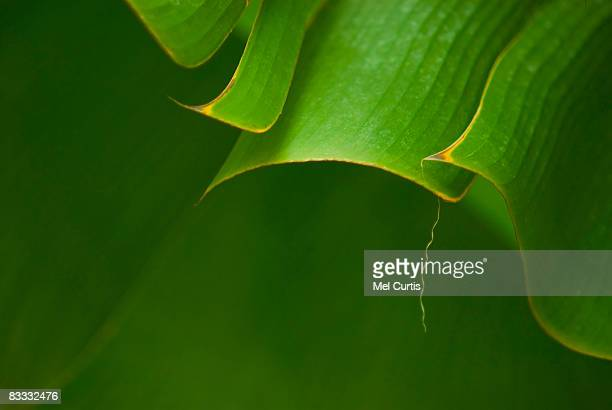 close ups of green plant forms