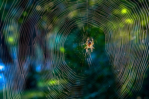 close up:spider on net in sunshine 517572088