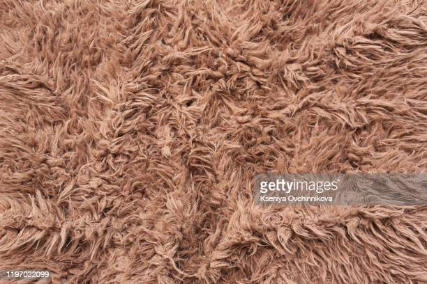 close view of a fur from a capra ibex - loup blanc photos et images de collection