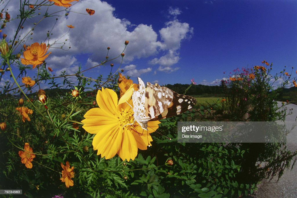 Close view of Butterfly perched on a flower : Stock Photo
