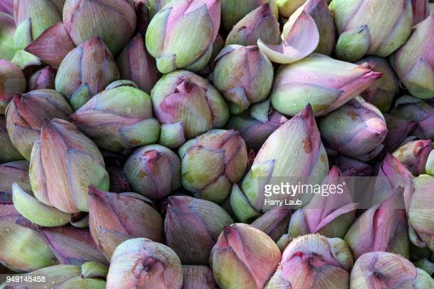 closed lotuses (nelumbo sp.) flowers, sri lanka - lanka stock pictures, royalty-free photos & images