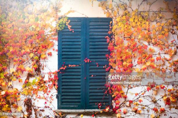 closed window with red ivy on a facade. - italia ストックフォトと画像