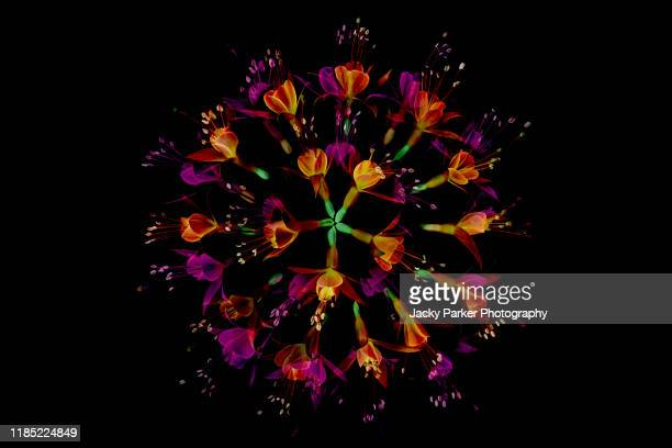 close-up abstract image of vibrant coloured fuchsia flowers arranged in a circle against a black background - circle stock pictures, royalty-free photos & images