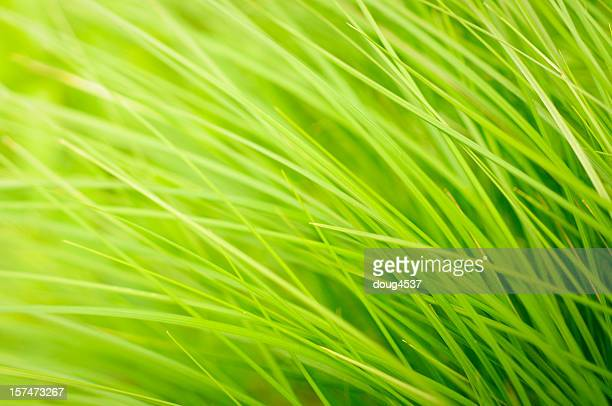 A close-up background image of green grass