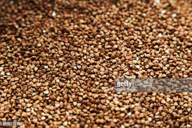 close-up background of beautiful brown buckwheat grains - buckwheat stock pictures, royalty-free photos & images