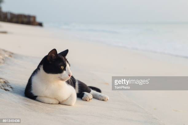 closeup black and white cat lying on the sand at ocean beach - domestic animals stock photos and pictures