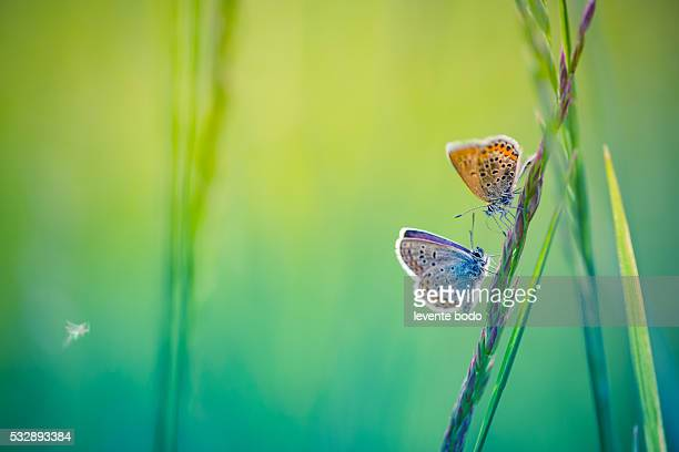 Closeup butterfly on grass