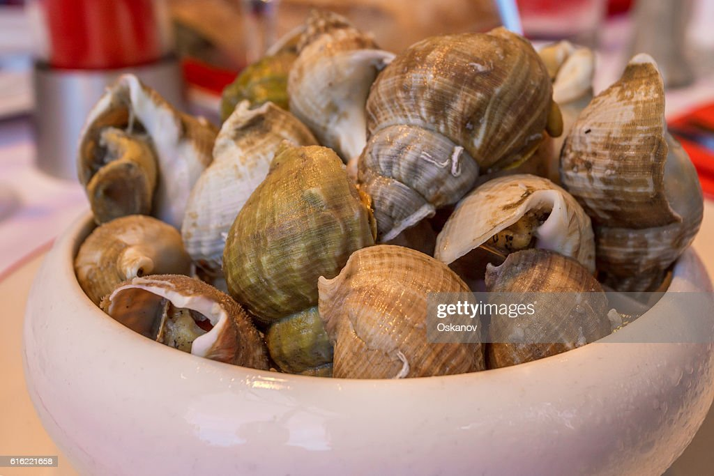 Closeup clams in dish : Stock Photo