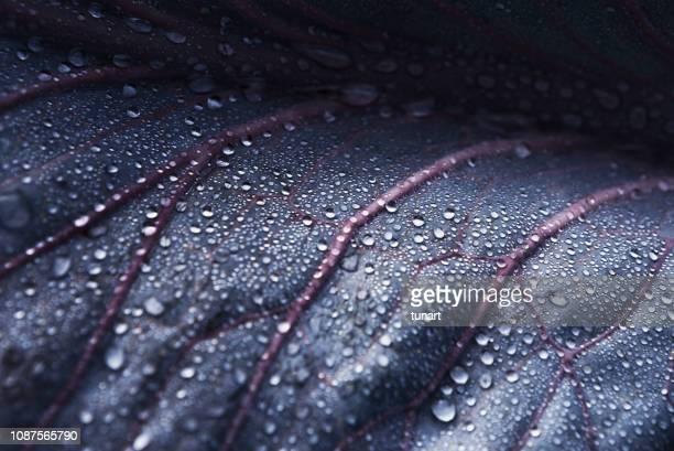 close-up detail van een kool blad met waterdruppels - extreme close up stockfoto's en -beelden
