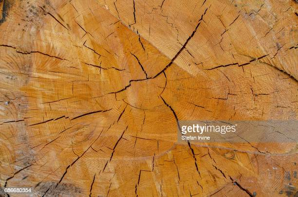 A closeup detail of a freshlycut tree trunk displaying concentric rings and cracks in the wood