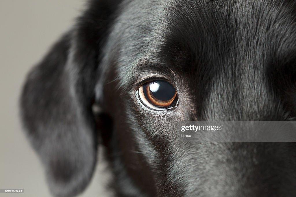 Close-up dog eye looking at you : Stock Photo