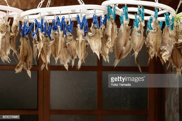 Close-up Dried Fish Hung on Clothespin Laundry Drying Rack Outdoors