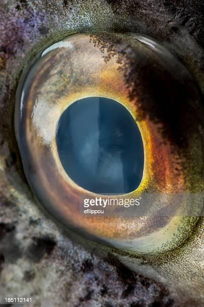 Close-up eye of a large fish