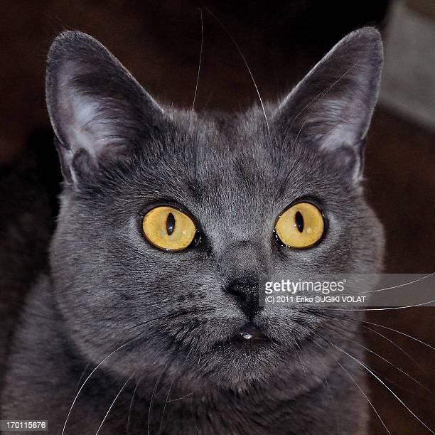 Close-up eyes of Douce.